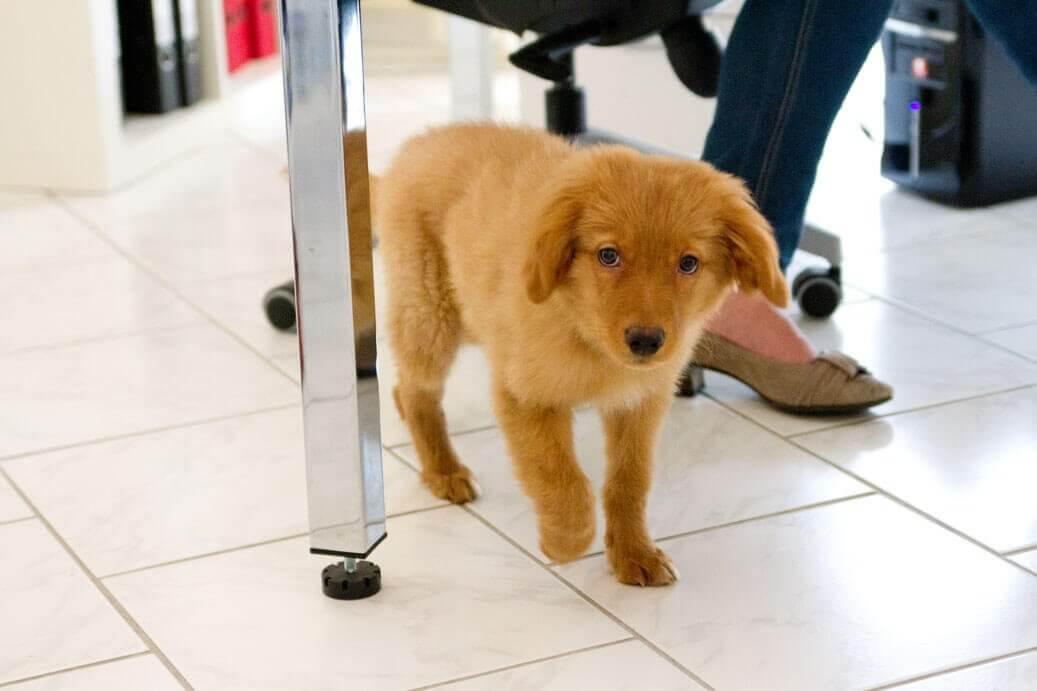 kollege hund