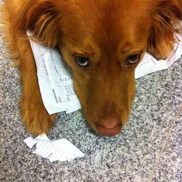 Bürohund bei kajado