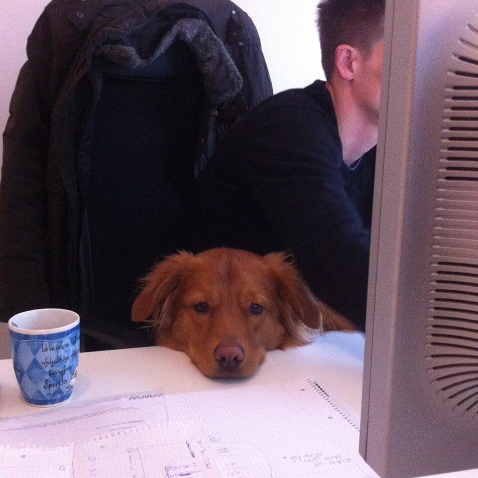 Bürohund Paul hilft bei kajado