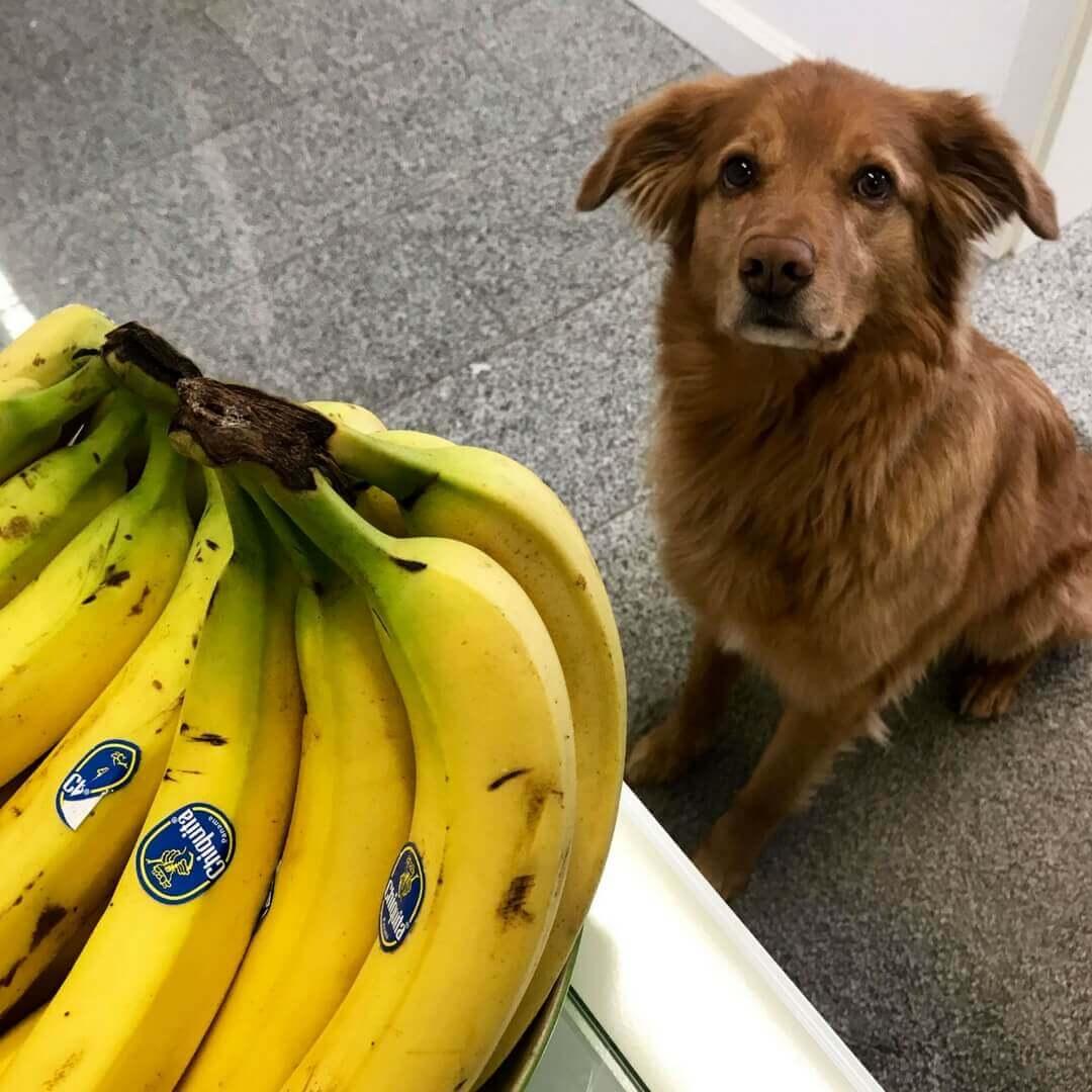 Wir sind süchtig nach Bananen - und Paul.